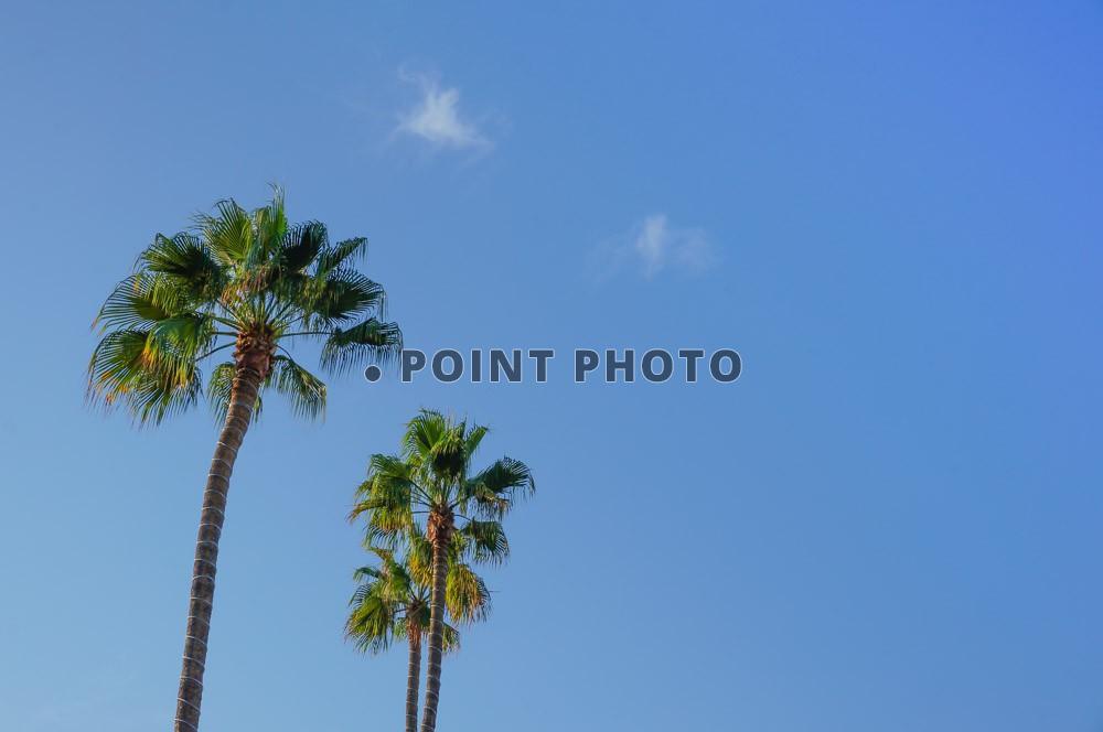 preview-ciel-palmier-a4